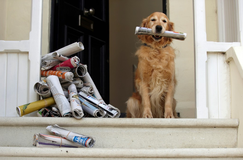 Dog_newspaper_crop