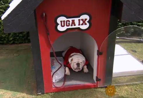 UGA mascot